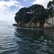 Mairangi Bay Coastal Path, King Tide 14.1.17