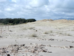 Dune system at the Waitohu Stream mouth in 2010 following a period of accretion associated with dune restoration activities. Photo: Sue McIntosh.