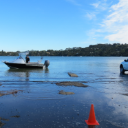 Herald Island boat ramp, Auckland King Tide 01022014