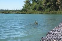 Roberta Reserve, Glendowie, Auckland King Tide 02022014