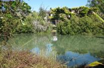 Roberta Reserve, Glendowie, Auckland 02022014