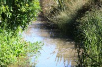Tahuna Torea Reserve, Glendowie, Auckland King Tide 02022014