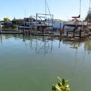 Milford Marina, Auckland King Tide 02022014