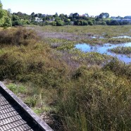 Tuff Crater Reserve, Northcote, Auckland King Tide 02022014