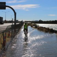North Western, Auckland King Tide 02022014