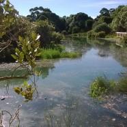 Temporary lake at Coxs Creek, Grey Lynn, Auckland King Tide 01022014
