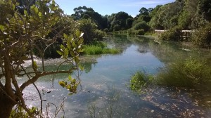 Sea level rise could permanently submerge wetlands, like this estuary at Cox's bay during the February King Tide. Image: