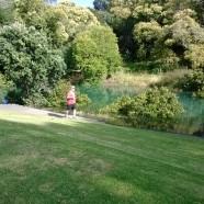 Pathway at Coxs Creek, Grey Lynn, Auckland King Tides 01022014