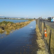 Cycleway, North Western causeway, Auckland 31012014