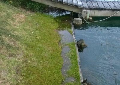 Milford Marina, King Tide 13.1.17